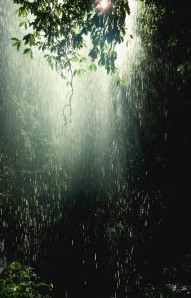 Rain in Australian Rainforest